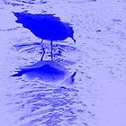 the gull's shadow by Loreto Bautista Jr.
