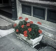 A Little Color In a Drab World by Rodney Williams