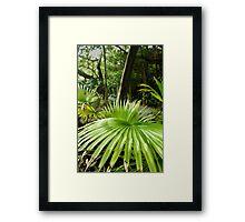 Southlands - Palm Framed Print