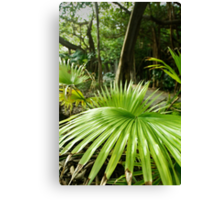 Southlands - Palm Canvas Print