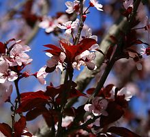 And the Almond Tree Blossomed by Segalili