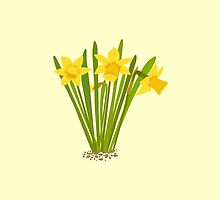 Beautiful Daffodils by Jacqueline Turton