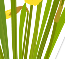 Beautiful Daffodils Sticker