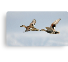 Gadwall Pair in Flight Canvas Print