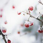 Snowy Berries by Debbra Obertanec