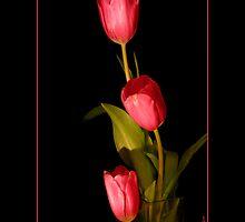 Spring Tulips by Sheryl Kasper