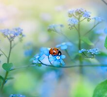 Forget-me-not Lady by Jacky Parker