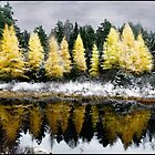 First Snow on Larches Under a Painted Sky by Wayne King