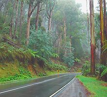 A Road Runs Through It, Marysville, Victoria, Australia by Philip Johnson