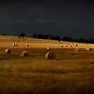 Rolled hay by Peter Hodgson