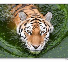 Tiger by Ellen van Deelen