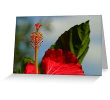 Close Up of Red Hibiscus Stamen and Pollen Greeting Card