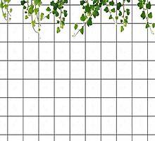 grid vines by sassandclass