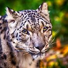 Snow Leopard 1 by damhotpepper