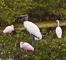 Birds Roosting in Trees  by Duane Fulk