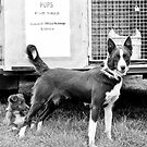 Pups For Sale by Patrick Riley