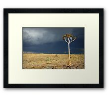 Kokerboom Framed Print