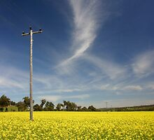 Canola Paddock with Pole by Adrianne Yzerman