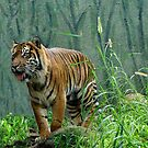 tigers out by Rick Playle