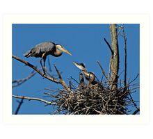 Great Blue Heron with Babies - Ottawa, Ontario Art Print