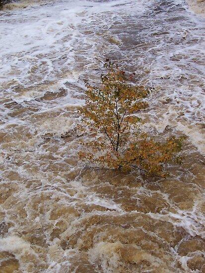 flood waters by Roslyn Lunetta