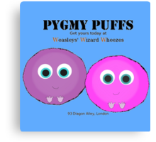 Pygmy Puffs For Sale Canvas Print
