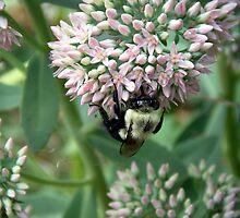 Bumble Bee by Wanda  Mascari