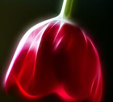 Neon Tulip by Lesley Smitheringale