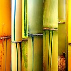 Bamboo Abstract by nesi