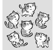 Six Impudent cats Photographic Print