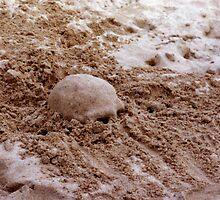 Don't Bury Your Head by Charissa May Borroff