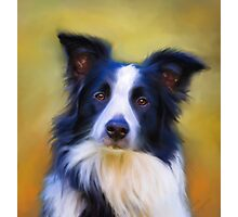 Taj - Border Collie Photographic Print