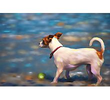 Jack Russell Terrier at the Beach Photographic Print