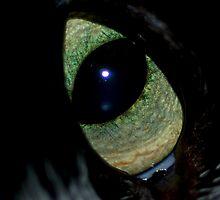 Jewel Eye by ApeArt