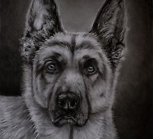 Noble - German Shepherd Dog by Michelle Wrighton
