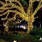 Christmas Oak Tree by imagetj