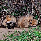Fox Kits by Michael Cummings