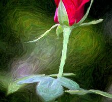Rosebud In Colored Pencil by Julie's Camera Creations <><