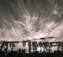 Sunset behind the trees by martinbenito