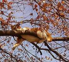 Cat on a tree by augustinet
