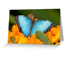 Peleides Blue Morpho Butterfly Greeting Card