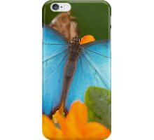 Peleides Blue Morpho Butterfly iPhone Case/Skin