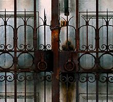 Cemetery Gates by Kendall Ahern