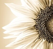 Sunflower petals by JH-Image