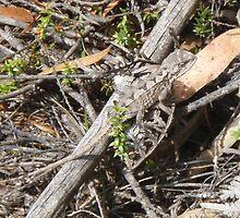 "camouflaged ""dragon"" in the Tasmanian bush near Penguin by gaylene"