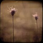 ...autumn breezes ... by Charlie Sedanayasa