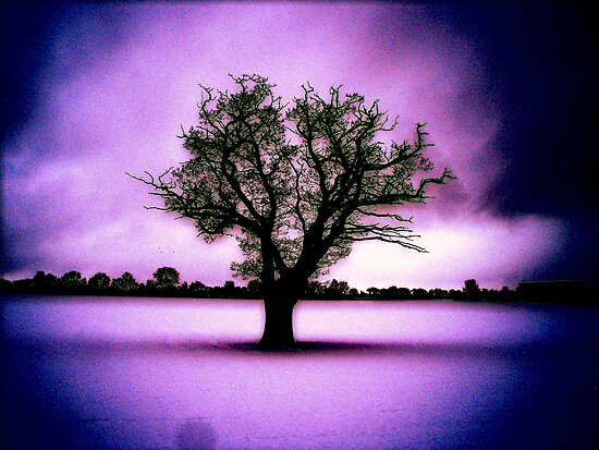 Lone Tree in Snow by James Stevens