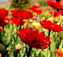 Red Flower Patch by tvlgoddess