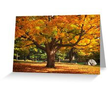 Autumn Colours 6 - MacKenzie-King Estate Greeting Card