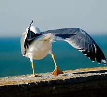Seagul by Filipe Goucha